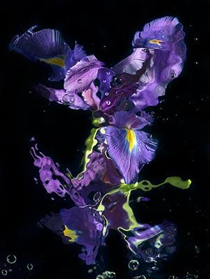 Allan Forsyth - Aqua Flora No10