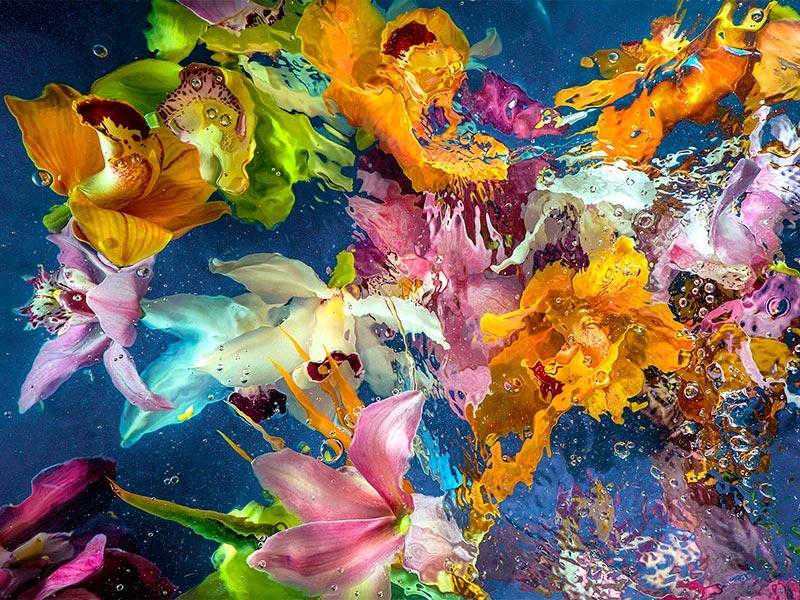 Allan Forsyth - Aqua Flora No6-th