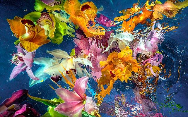 Allan Forsyth - Aqua Flora No6