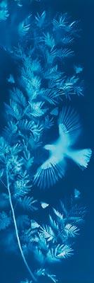 Allan Forsyth - Dream in Blue No1