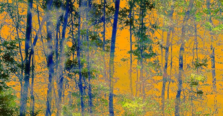 BlinkArt - Trees 7