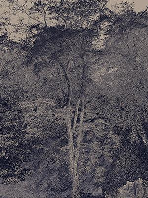 Hugh Hamshaw Thomas - The Blue Tree - Holcombe 2019